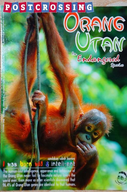 Sabah - Orang Utan 01
