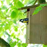 Koolmeesje in het vogelhuisje