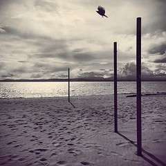 Escape.    #vscocam #spring #seattle #beach #birdinflight