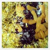 #dandelionwine #fermentallthethings