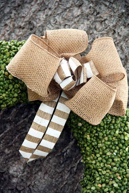 Done_Bow-Close-Up-Against-Tree