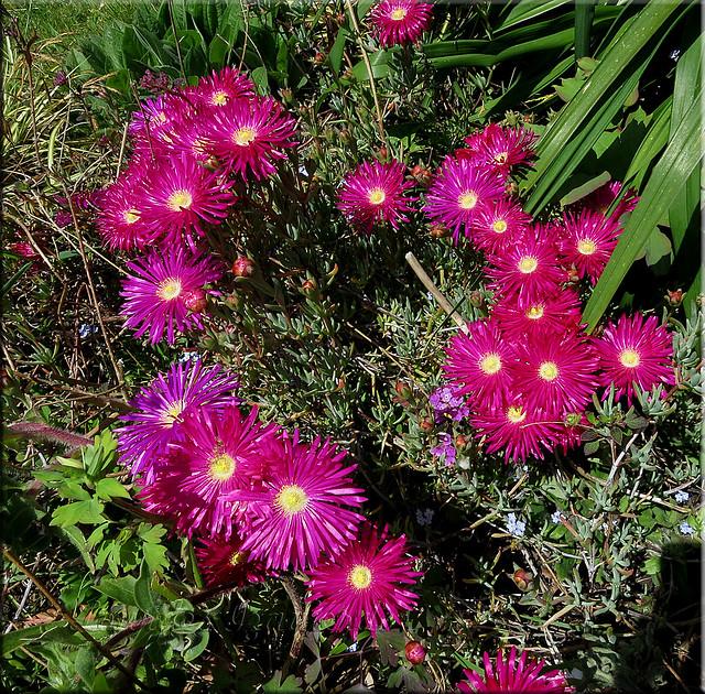 El jard n de nunca acabar rayitos de sol - Plantas para jardineras al sol ...