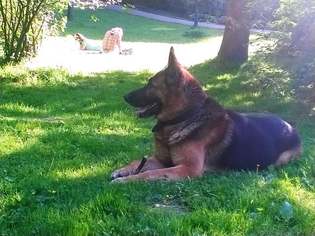 a dog. Lviv, Ukraine