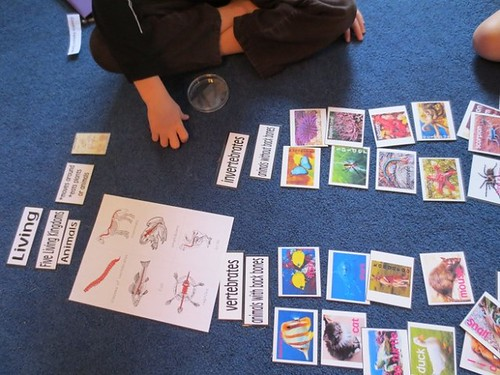 Vertebrate and Invertebrate Sorting (Photo from The Homeschool Den)