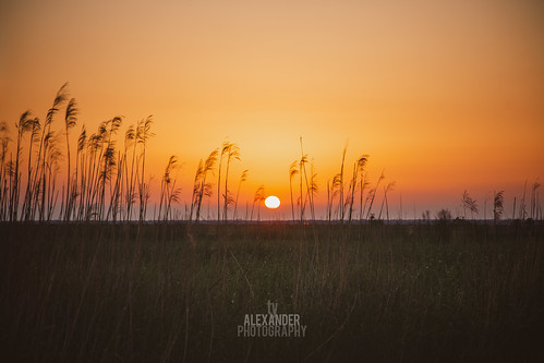 sunset summer vacation orange sun sunlight green nature beauty field grass yellow canon landscape photography gold leaf spring stem louisiana warm relaxing naturallight calm photograph heat backgrounds backdrop marsh organic copyspace relaxation tallgrass senic tranquilscene weddingphotographer timothygrass serine beautyinnature ef24105mmf4lisusm focusonforeground seaoatgrass 5dmarkiii northshoreweddingphotographer tyalexanderphotography madisonvillelouisianaphotographer mandevillelouisianaphotographer covingtonlouisianaphotographer bedicolouisianaphotographer ponchatoulalouisianaphotographer hammondlouisianaphotographer slidelllouisianaphotographer folsomlouisianaphotographer abitaspringslouisianaphotographer