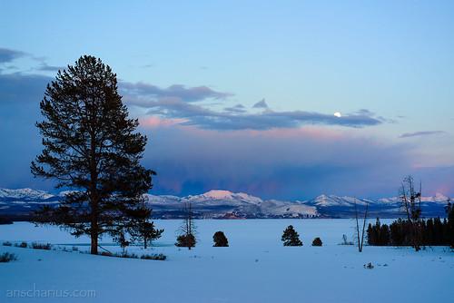 Yellowstone NP #1 - Nikon D800E & AiS 2,8/55mm Micro