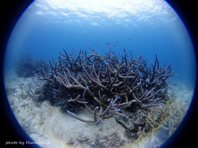 極上サンゴがいっぱい!!!
