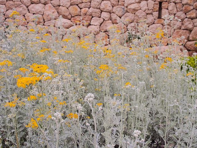 路邊的野花