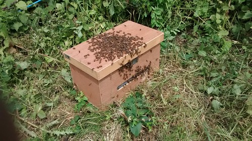 swarm box June 14 2