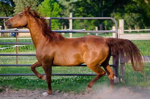 I'm_no_senior_horse
