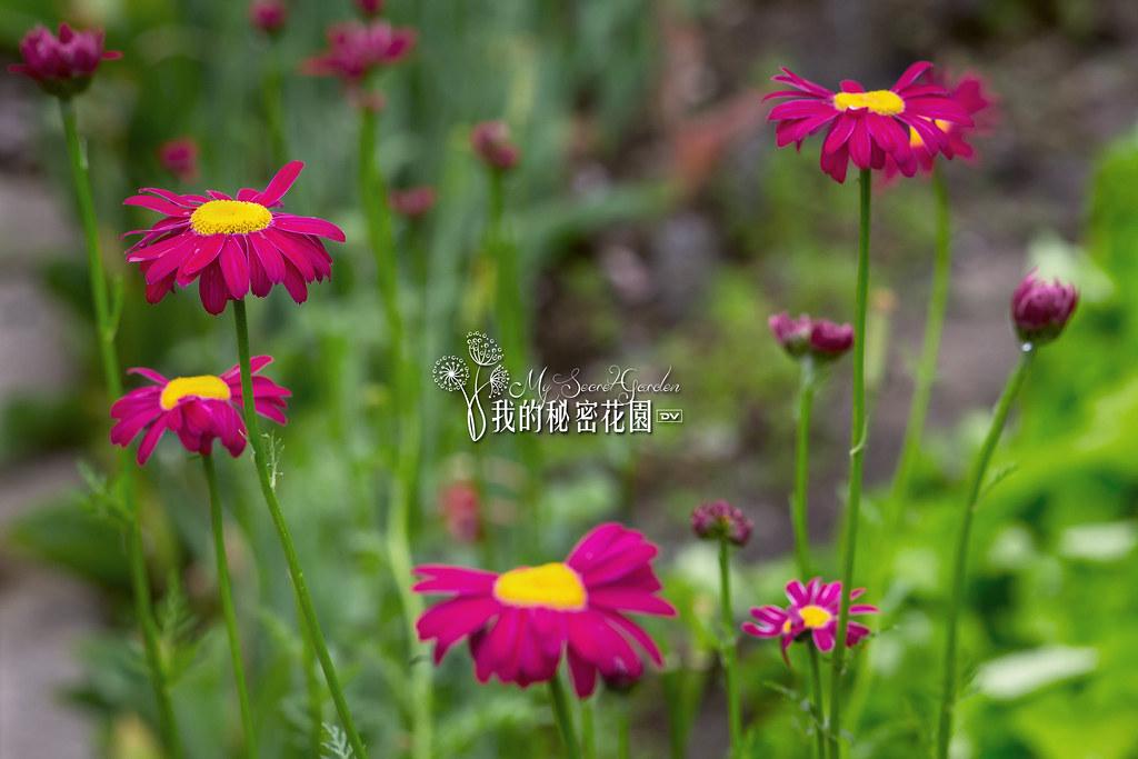 ►►► My Secret Garden 我的秘密花園 4 ● DV ◄◄◄