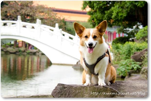 DOG_3640