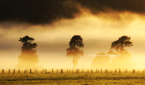 trees light mist weather fog rural landscape golden farm silhouettes foxglacier southisland layers westcoast westland nationalgeographic southwestland rinathompson