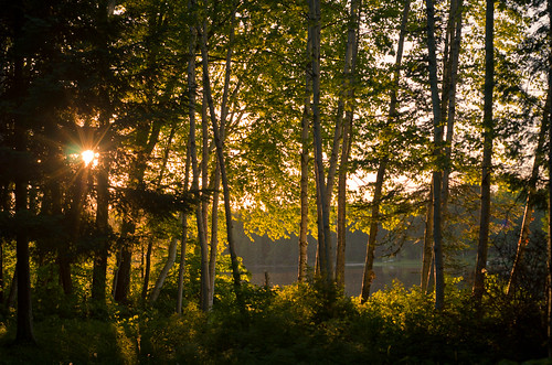 trees sunset sun lake leaves pine forest landscape evening back leaf spring woods glow michigan bark birch lit