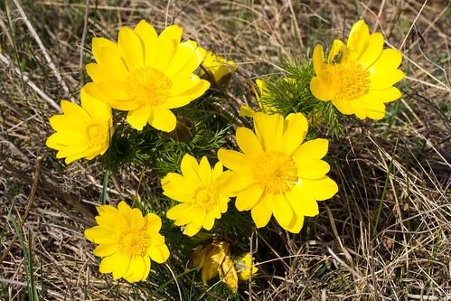 Flowers, buds