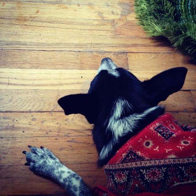 Nap time. #littledoginthebigcity