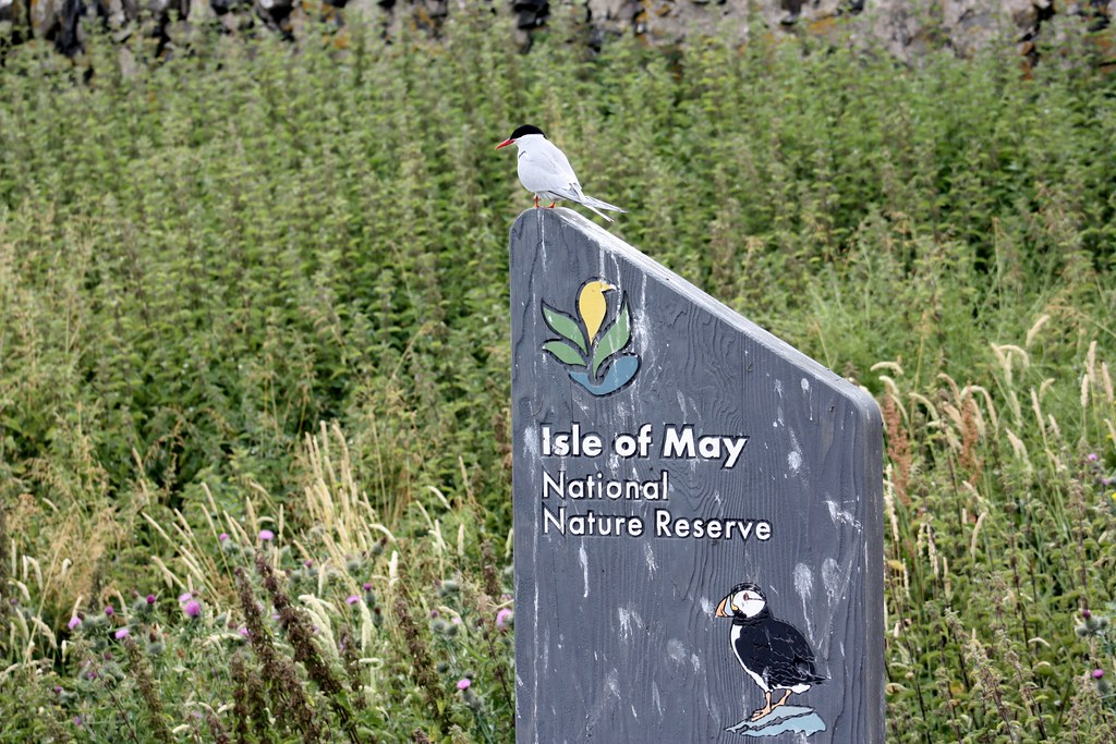 Isle of May National Park Reserve