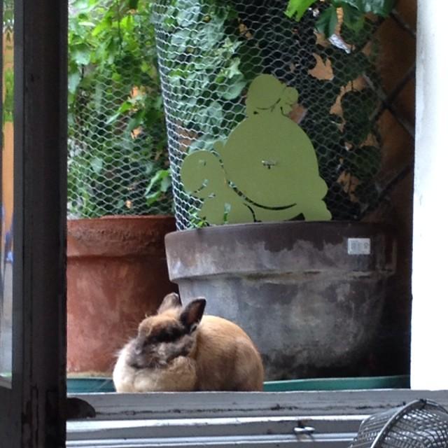 Coniglio appallottolato #rabbit #bunny che abbia freddo @riccipiccina ?
