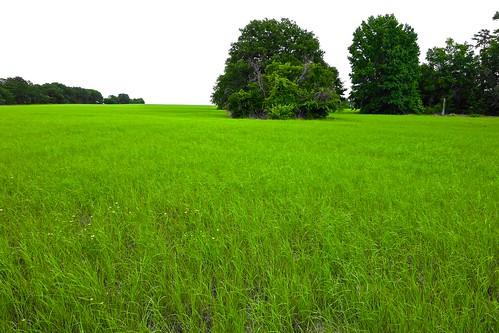 ranch sky usa tree green grass texas sony east coastal pasture hay bale rx100
