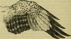 """Image from page 581 of """"Reptiles and birds : a popular account of their various orders, with a description of the habits and economy of the most interesting"""" (1883)"""