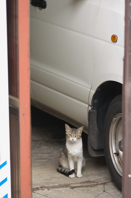 東京路地裏散歩 ネコ 雑司が谷・南池袋 2014年7月6日