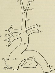 """Image from page 22 of """"Bulletin du Muséum national d'histoire naturelle"""" (1895)"""