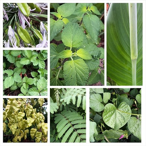 Just some of the greens #summer #gardening #colors #green