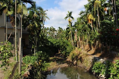 傍水而居的五溝村,水有如聚落的靈魂。