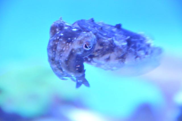 08_Georgia Aquarium