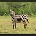 NL8A9001_120dpi by butchramirezphotography