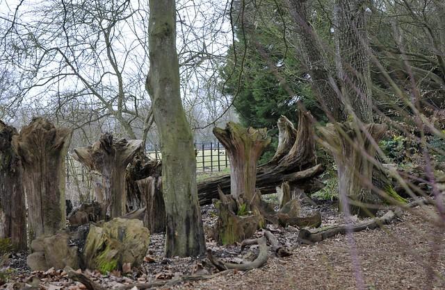 Wimpole Hall stumpery #3