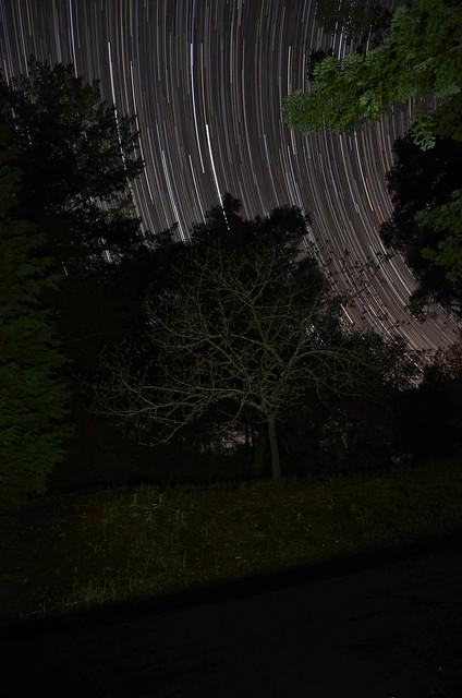 Star-Struck Willow
