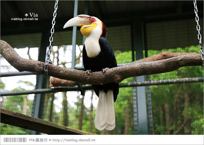 【新竹景點推薦】森林鳥花園~親子旅遊的好去處!在森林裡鳥兒與孩子們的樂園42