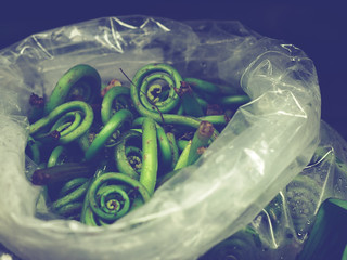 { fiddlehead ferns }