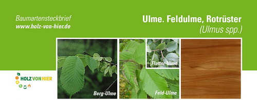 Ulme-Header