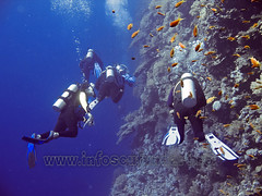 promotii curs scufundari