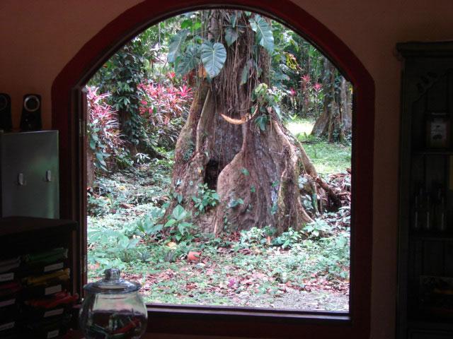 through-the-window,-chocolateria