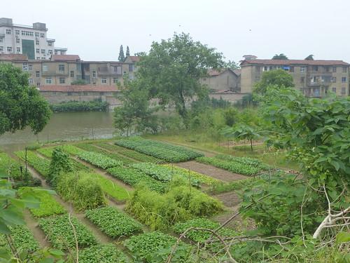 Jiangxi-Yushan (127)