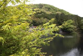 みどり紅葉と金鱗湖