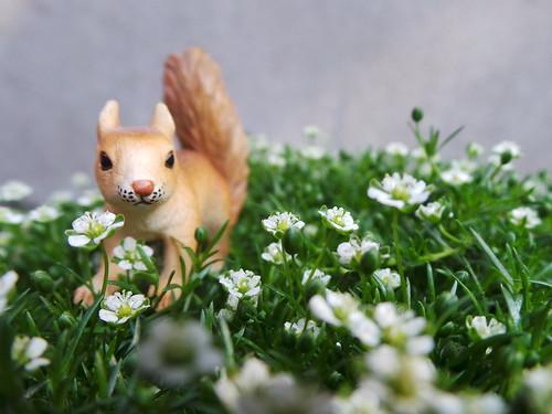 Toy squirrel in garden greens