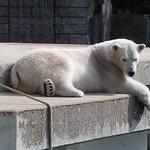 Anori II Zoo Wuppertal CK