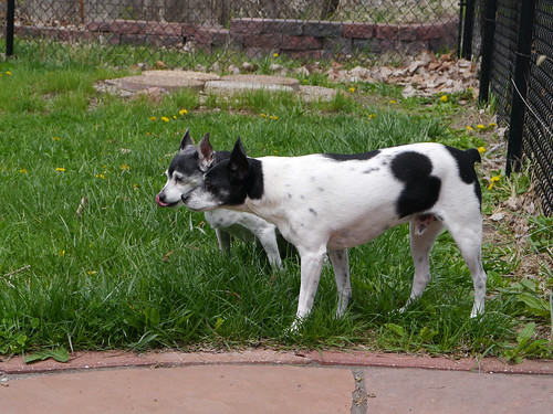 2014-04-26 - Dogs Outside - 0005 [flickr]