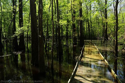 reflection underwater southcarolina swamp congaree congareenationalpark april2014