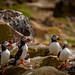 Puffins on Inner Farne by Scotslass2012