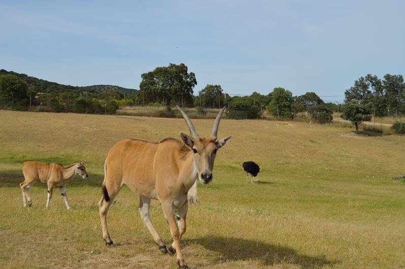lara-vazquez-madlula-blog-wilderness-safari-madrid
