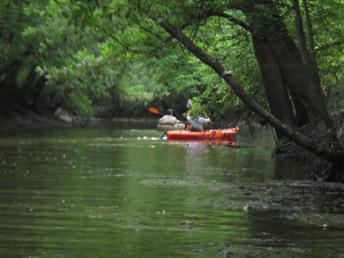 More kayakers, a.k.a. mosquito bait.