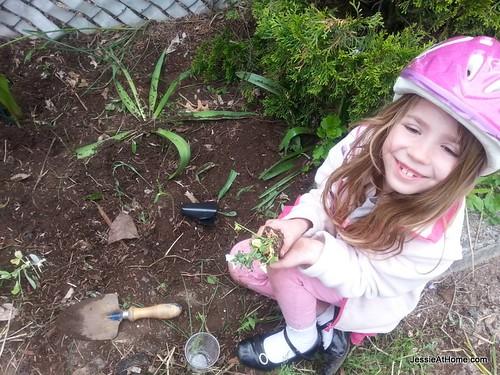 Kyla-Planting