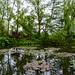 Monet's Water lily garden ©D&S McSpadden