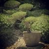 #pic #gardens #picoftheday #photooftheday #bestoftheday #instalike #instadaily #me