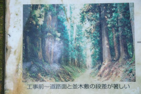 日光杉並木道